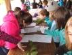 Gozdna učna pot Loka